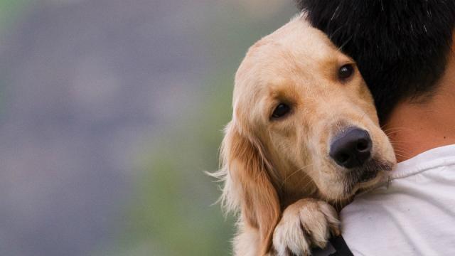 Foto I cani fanno i dispetti?