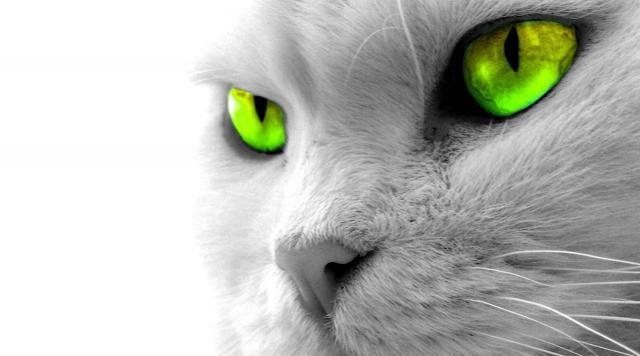Foto Gli occhi dei gatti