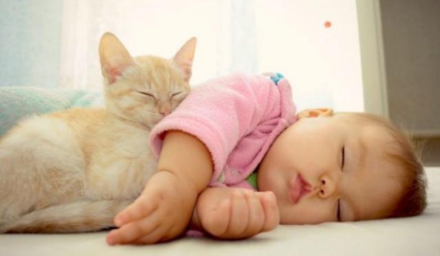 Foto Gatti e neonati in casa