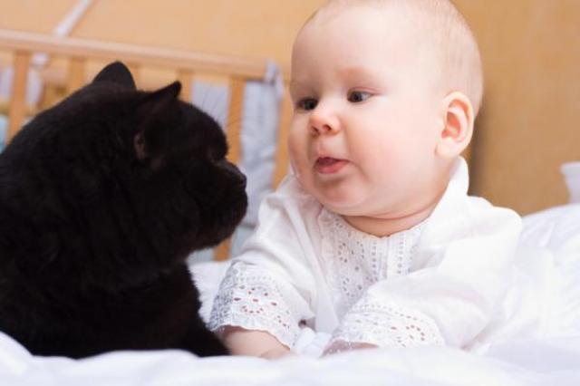 convivenza gatto bambino