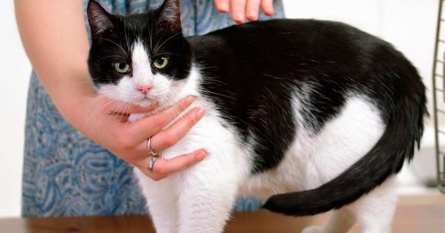 Foto Come prendere un gatto senza fargli male