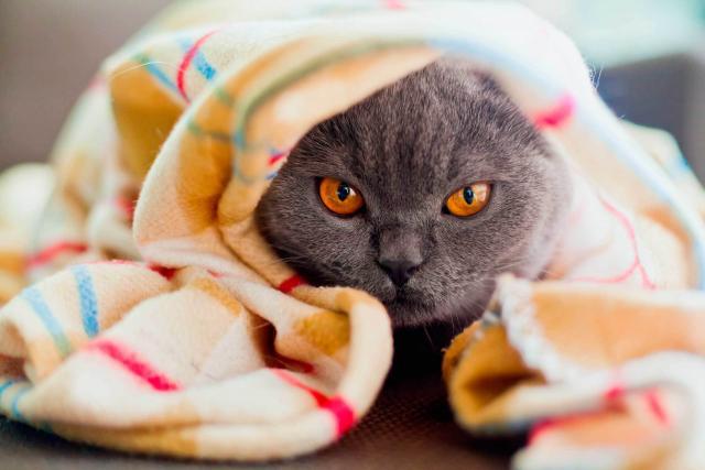 Foto Il mio Gatto non mangia e non beve