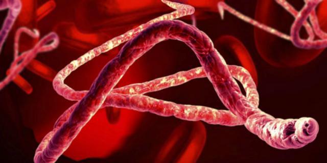 ebola nei cani