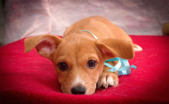 Foto Adotta un cucciolo: come, quando e perchè