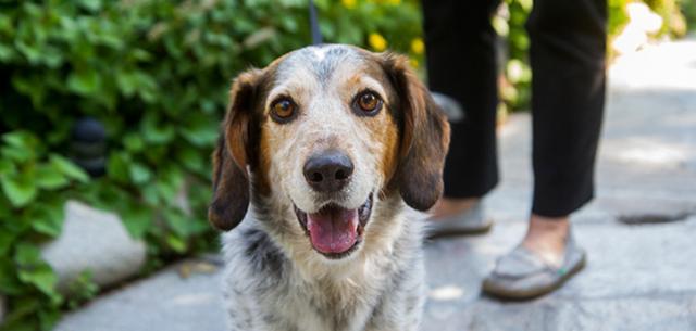 eta cane per adozione