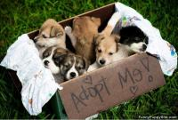 cane adottato