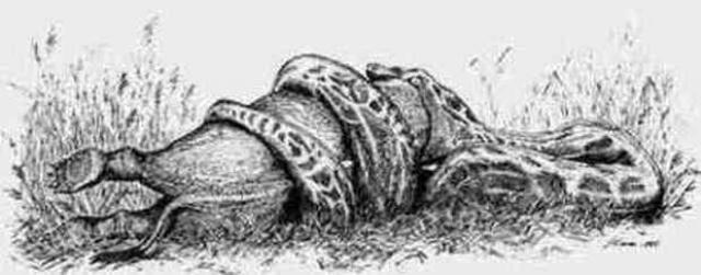 serpente gigante di Garstin