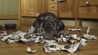 cane mangia giornale