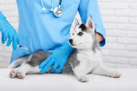 Foto Vaccini anticancro cane: cosa sono e come agiscono