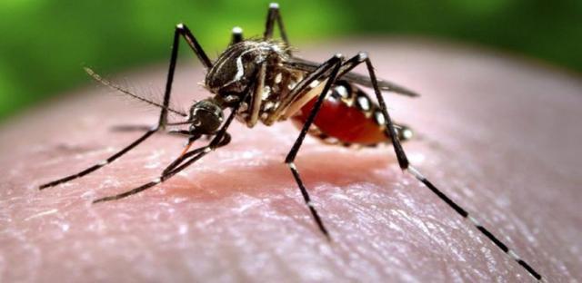 Foto Quanto vivono le zanzare?