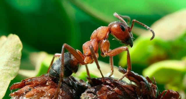 Foto Quanto vive una formica?
