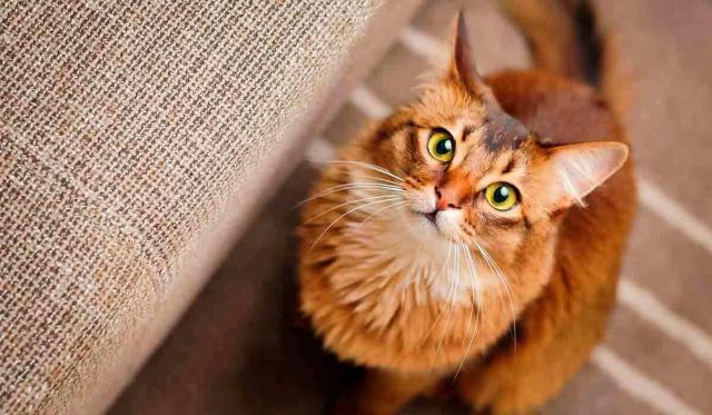 gatti ci capiscono