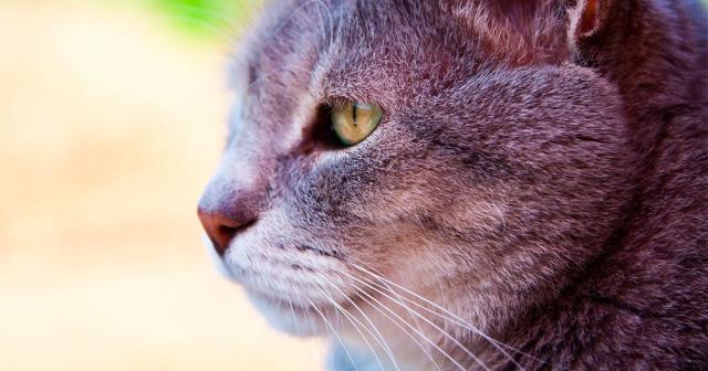gatti pensano