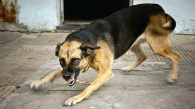 Foto Rabbia del Cane e come curarla