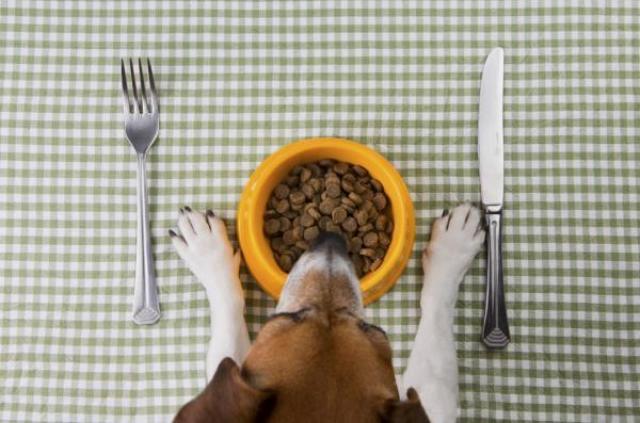 Foto Il mio cane non mangia se non sto con lui, perchè?