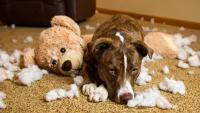 Foto 9 segni di paura nei Cani