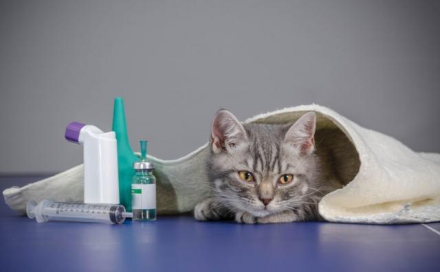 Foto Farmaci per il diabete nel Gatto