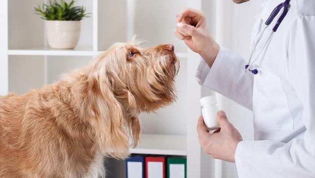 Foto Farmaci per epilessia nei Cani