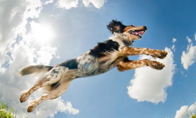 Foto Cani più sani del mondo