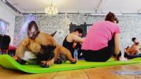sport yoga cane