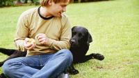 pastorizia cane