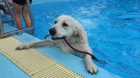 sport nuoto cane