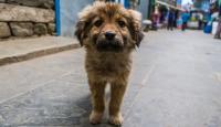 Foto Com'è la vita dei cani randagi?