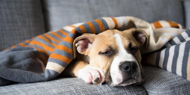 Foto Influenza canina: sintomi e trattamento