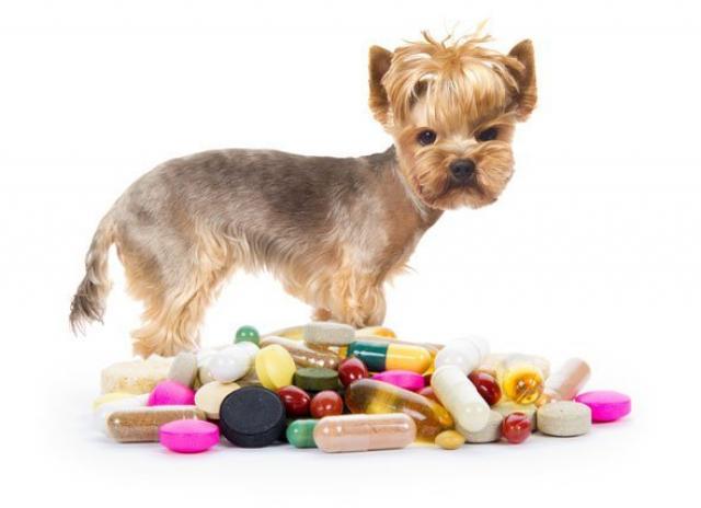 Foto Amoxicillina - Farmaci per cani e gatti.