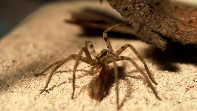 Foto Quanto vive un ragno?