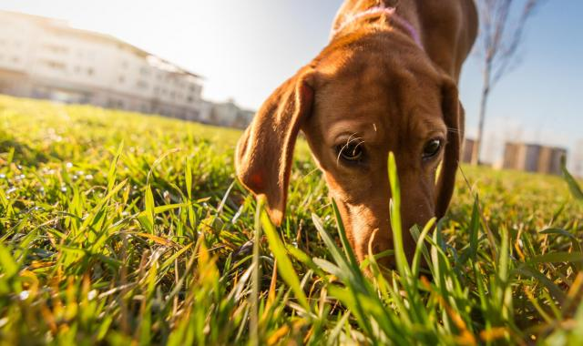 cane e sapori