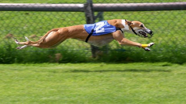 cane sportivo integratori