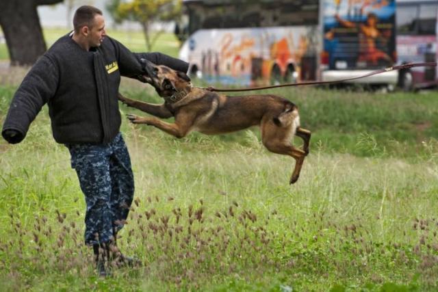 Foto Cosa sono i Cani da attacco?