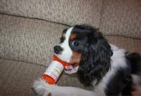 Foto Atenololo - Farmaci per cani e gatti