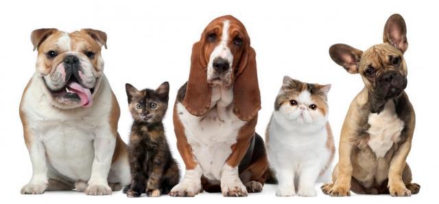 cani e gatti cibo