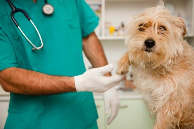 tumore cane