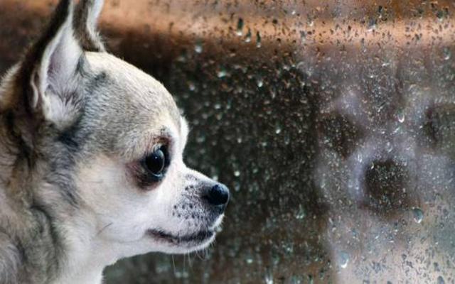Foto Malattie mortali nei Cani