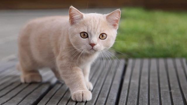 Foto Tipi di diarrea nei gatti e loro trattamento