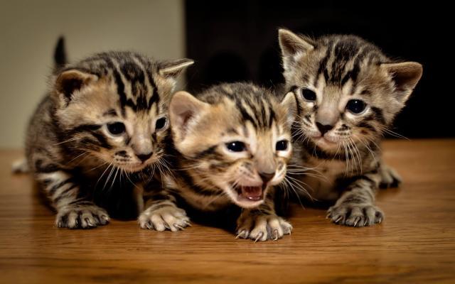 Foto Come calmare un gatto iperattivo?