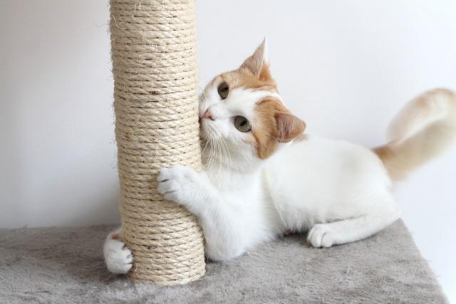 Foto L'importanza dei raschietti per i gatti