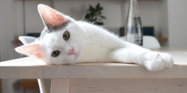 Foto I gatti che vivono in casa sono felici?