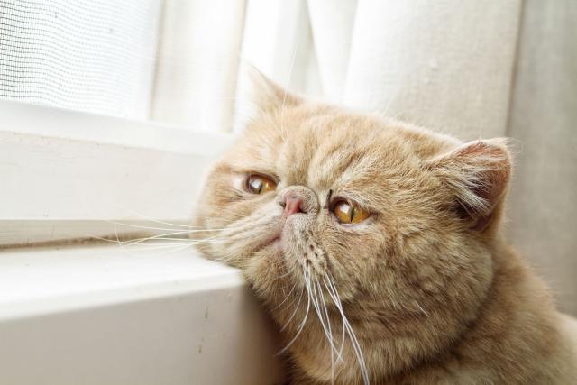 gatto appartamento
