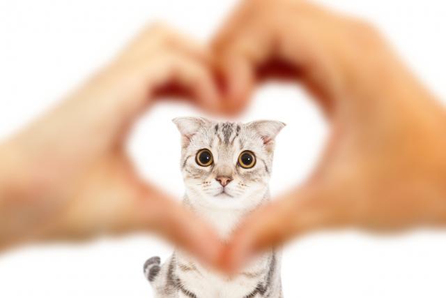 Foto Insufficienza cardiaca nel Gatto: cause, sintomi e cure