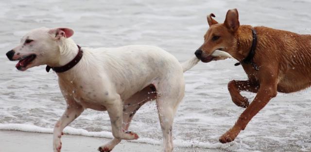 Foto 11 segreti sulla coda del Cane