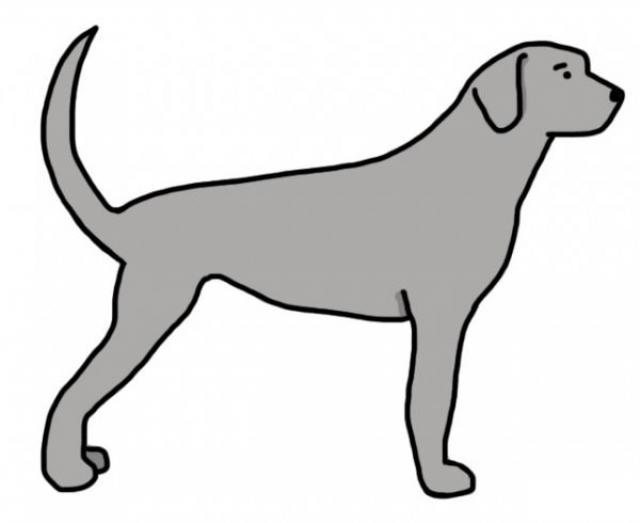 coda cane comando