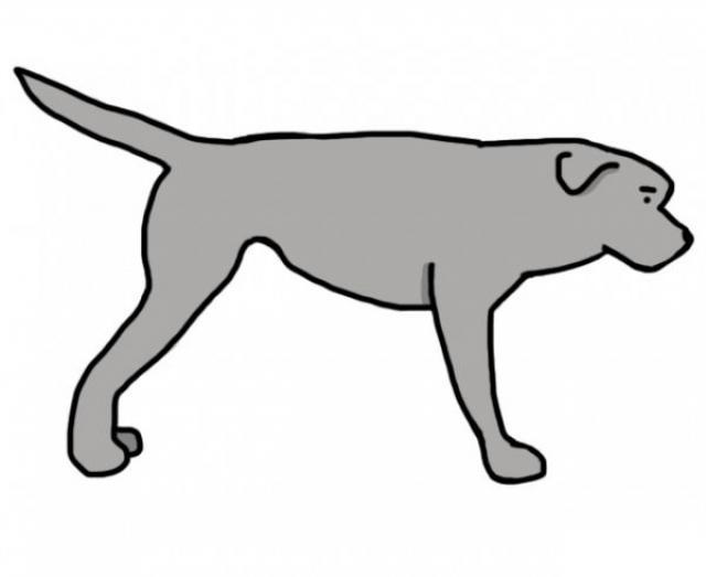 coda dritta cane cosa significa