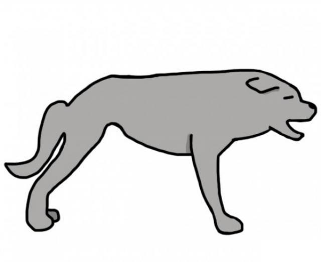 coda curva cane