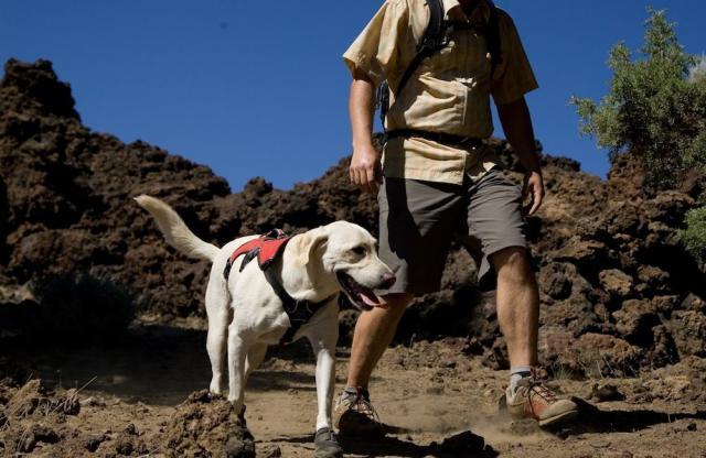 Foto Come fare escursioni con il Cane