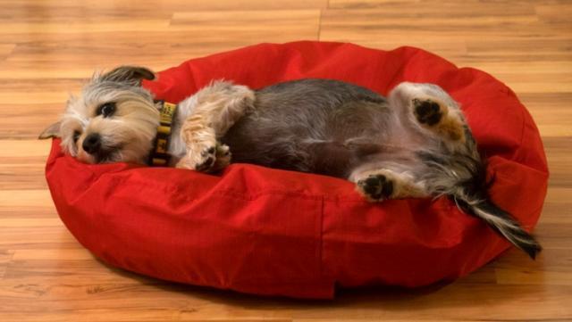 Foto Cane allergico al letto?