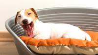 letto cane allergico